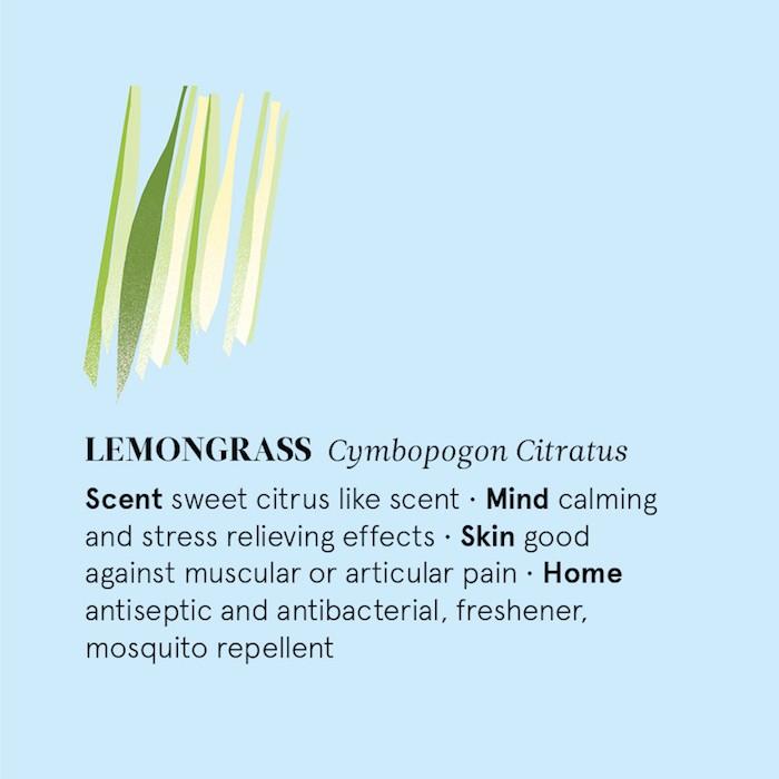 Lemongrass Essential Oil - 12ml - Information