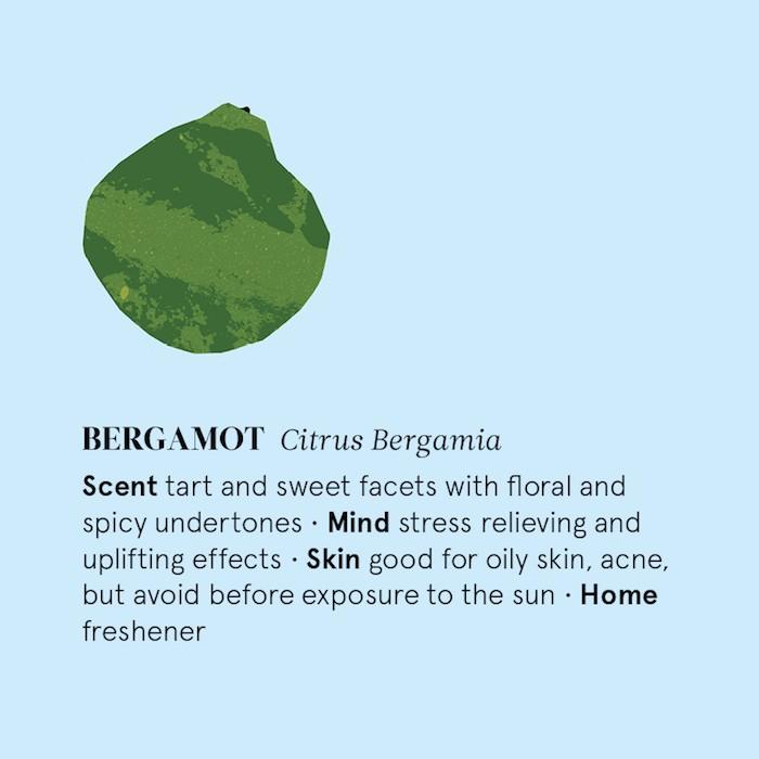 Bergamot Essential Oil - 12ml - Information
