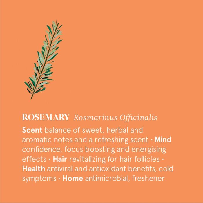 Rosemary Essential Oil - Organic - 12ml - Information