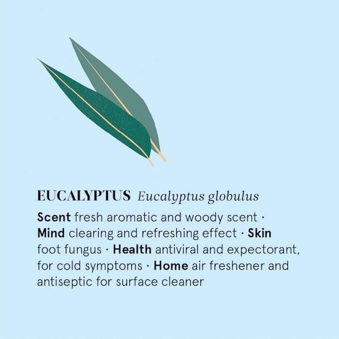 Eucalyptus Essential Oil - 12ml - Information